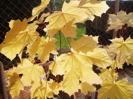 FOTKA - podzimní ...