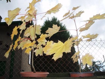 FOTKA - podzimní ... ..
