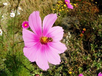 FOTKA - Krásně uprvená zahrada Makču Pikču