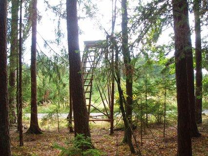 FOTKA - v lese u posedu