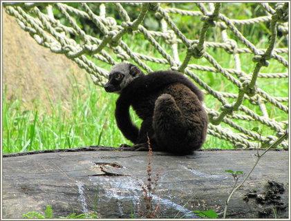 FOTKA - Opička na kmeni