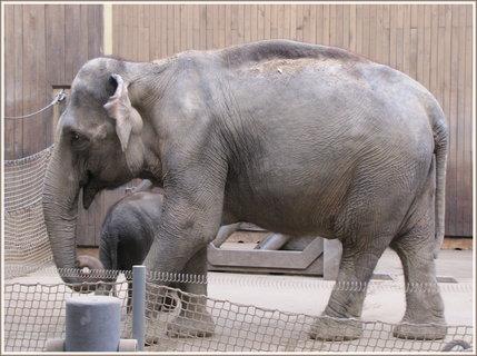 FOTKA - Slonice se slůnětem