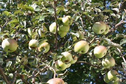 FOTKA - Jablíčka X.