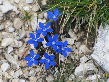 FOTKA - Záběr se skupinkou modrých květů