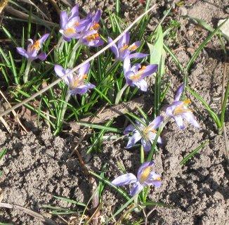 FOTKA - Vzpomínka na jaro