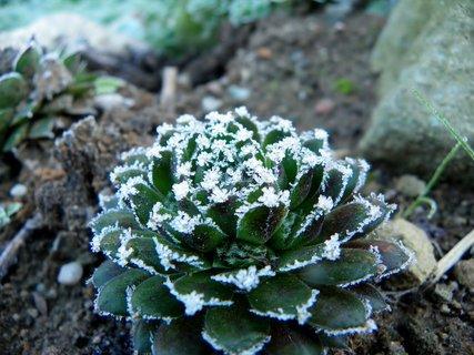 FOTKA - Netřesk ozdobený paní zimou