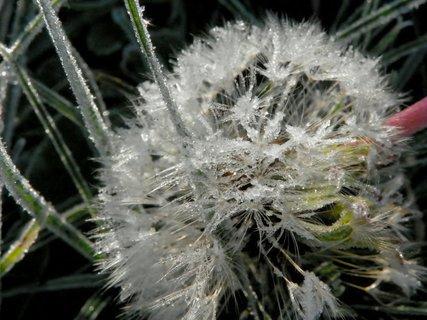 FOTKA - V ledovém objetí