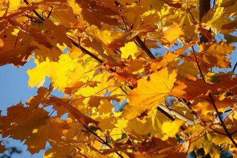 FOTKA - podzimní zbarvení