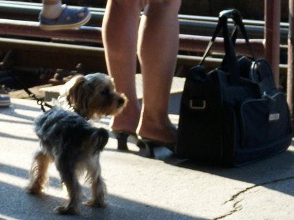 FOTKA - Čekám na vlak