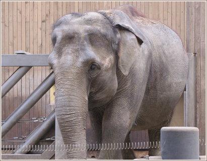 FOTKA - Záběr slonice