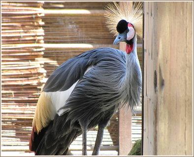 FOTKA - Elegantní pták