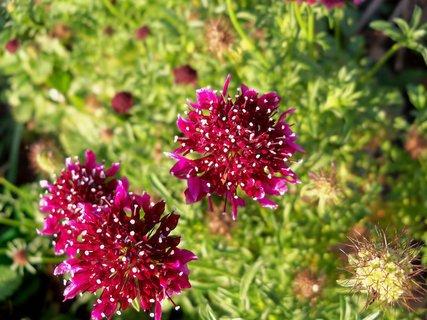FOTKA - Kvetou od jara do podzimu