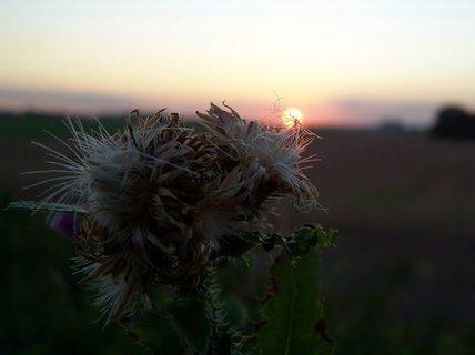 FOTKA - Slunce na bodláku