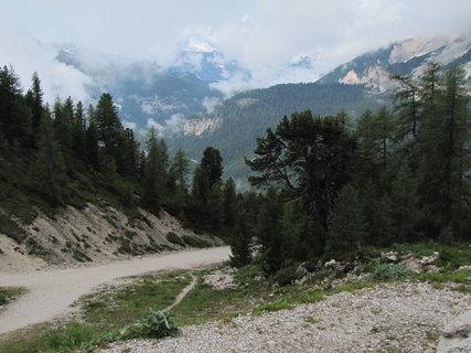 FOTKA - Mlžný záběr s cestou a stromy