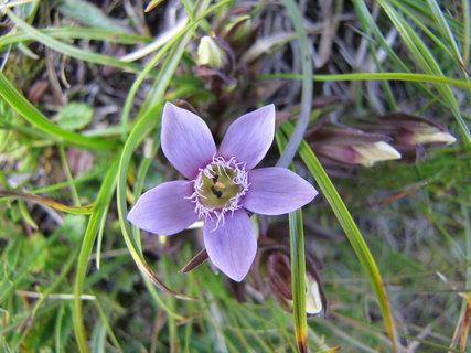 FOTKA - Záběr s jedním květem