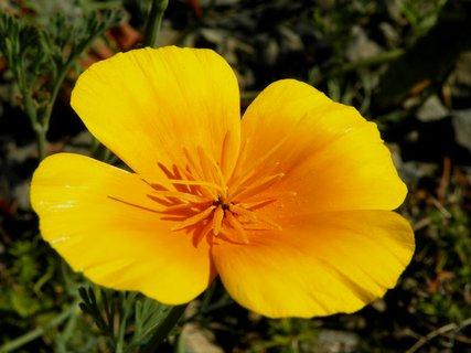 FOTKA - Květinka jako sluníčko