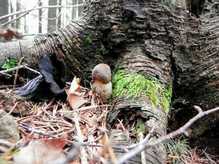 FOTKA - Maličký křemenáček