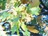 Podzim v parku 2