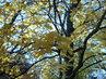 Podzim v parku 3
