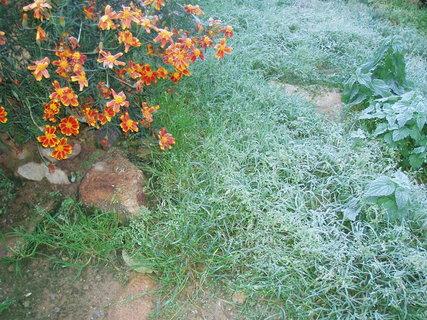 FOTKA - ranní mrazíky v zahradě