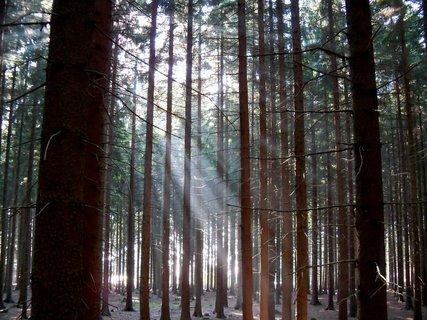 FOTKA - Podzimní paprsky v lese-