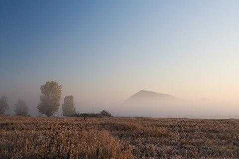 FOTKA - Zlatník v mlze