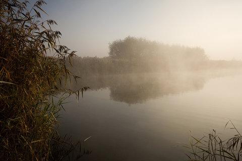 FOTKA - Mlha na rybníku.