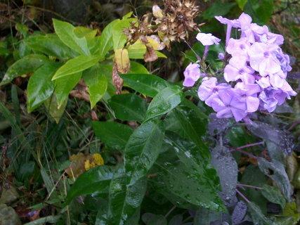 FOTKA - Dnes na zahradě...