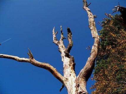 FOTKA - Vzhůru k výškám