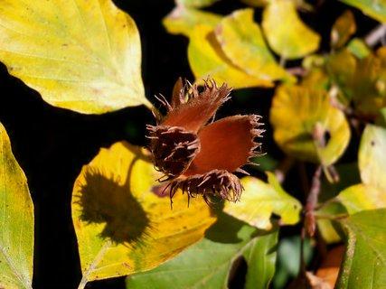 FOTKA - Podzimní dekorace