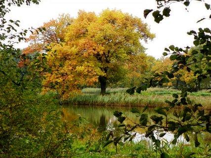 FOTKA - Podzim u rybníku