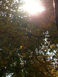 FOTKA - Podzimní procházka 17