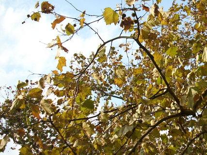 FOTKA - Podzimní 19