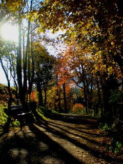 FOTKA - Podzimní procházka k Ritzensee 16