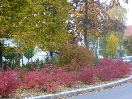 FOTKA - krása podzimu
