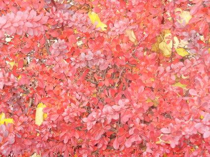 FOTKA - Podzim sám vybarvil