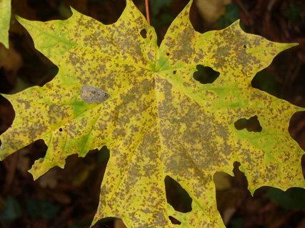 FOTKA - Podzim vybarvil, hmyz vyžral