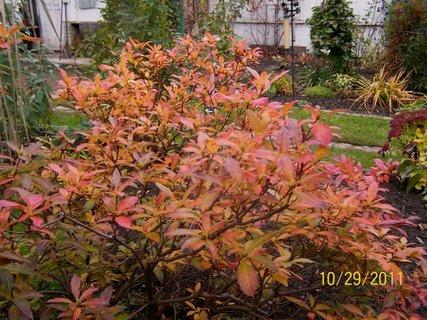 FOTKA - zahradu zdobí i barevná azalka