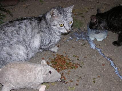 FOTKA - kočky ......,..