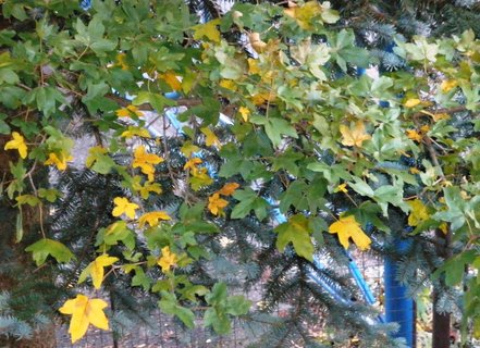 FOTKA - Stromy u plotu