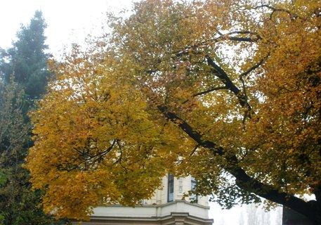 FOTKA - Podzim se barví