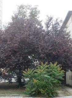 FOTKA - Různé barvy podzimu
