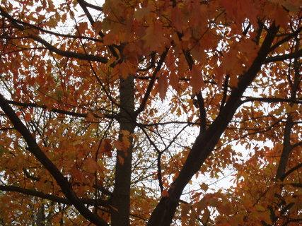 FOTKA - z podzimní procházky . . ..