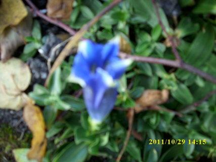 FOTKA - Na skalce je ještě  hořec...30.10.2011