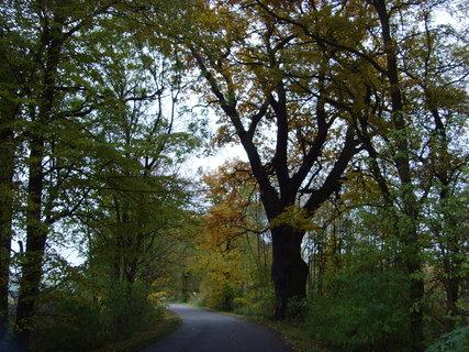 FOTKA -  Tady bydlí-dub