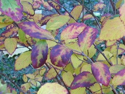 FOTKA - Podzimní procházka 20
