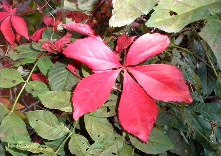 FOTKA - Rudá a zelená
