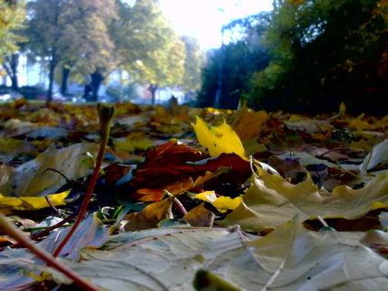 FOTKA - Listí na zemi
