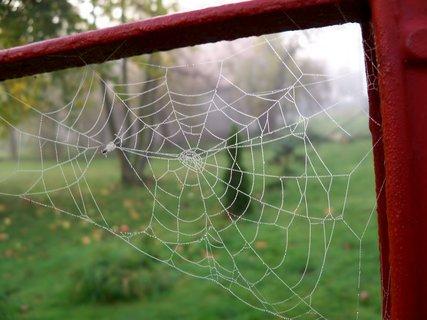 FOTKA - Podzimní pavučinkování
