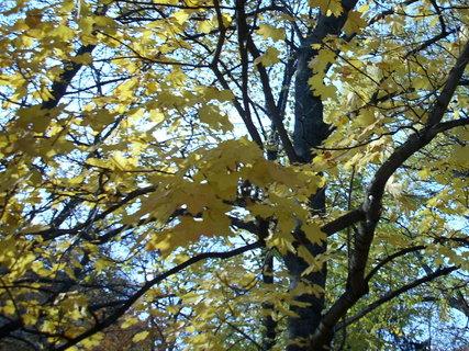 FOTKA - Podzim v parku 3